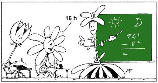 plante calculatrice blog