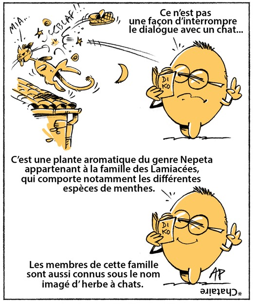 chataire blog